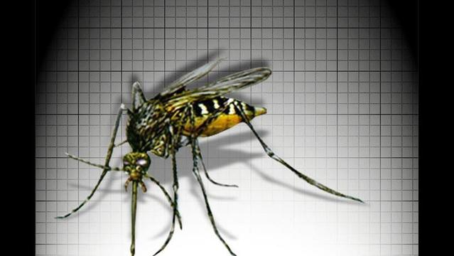 Four Tips to Keep Mosquitoes Out of Your Yard