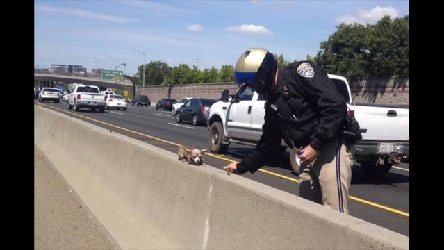 PIC: Highway Patrol Rescues Tiny Pup from Freeway