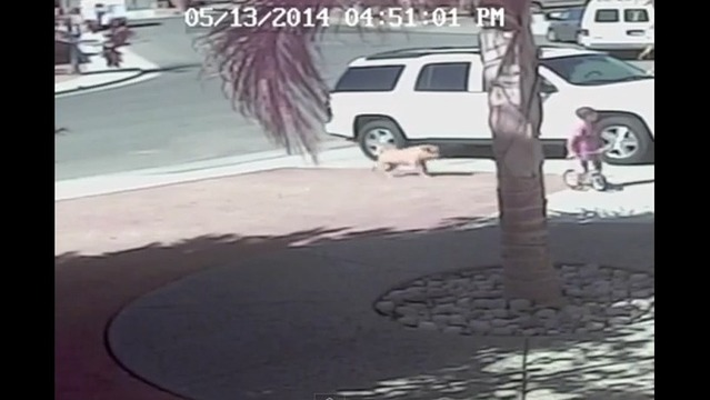 Watch: Cat Saves Boy from Dog Attack
