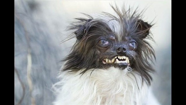 Abused Pooch Named World's Ugliest Dog