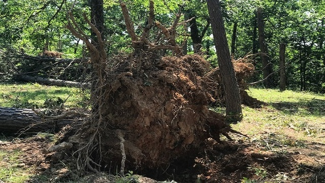 NWS: EF-1 Tornado Traveled Through Sequoyah, Crawford Counties