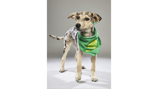 Local Animal Shelter Dog Participating in Animal Planet Puppy Bowl