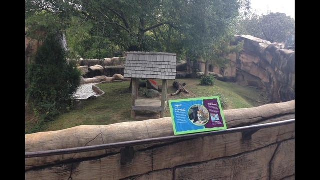 Child In Critical Condition After Falling Into Little Rock Zoo Jaguar  Exhibit