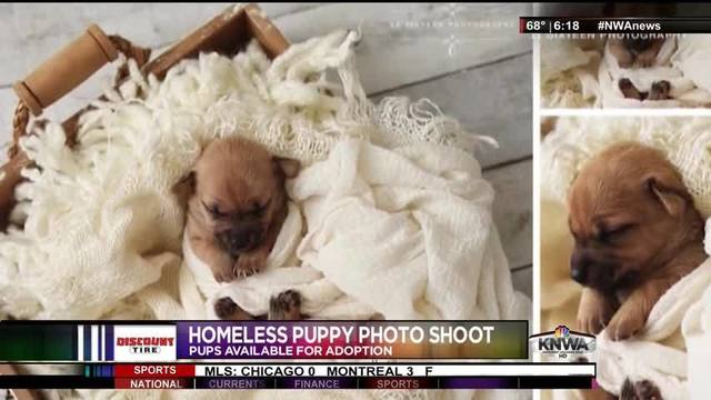WebExtra: Photo Shoot for Homeless Puppies