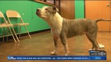 Pet of the Week: Meet Mikey at Fayetteville Animal Services