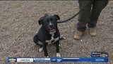 Purina Presents: Chance & Harley in Pet of the Week