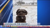 Pups and People Play in the Snow