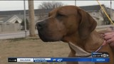 Purina Presents: Meet Buster in Pet of the Week
