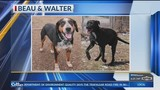 Purina Presents: Hairu, Beau and Walter at Fayetteville Animal Services
